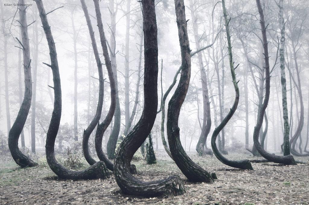 El Bosque Encorvado de Pomerania